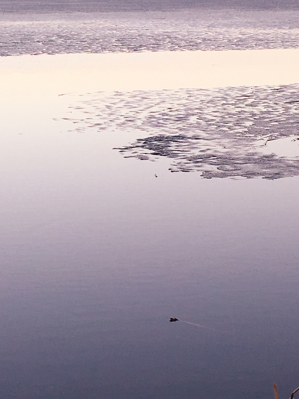 Excited to see the ice melt away and to see the stillness of the water on walks.