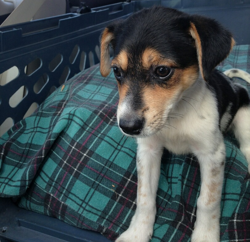 First day bringing Pixie home from Fairbault, MN. She was originally named Susie.