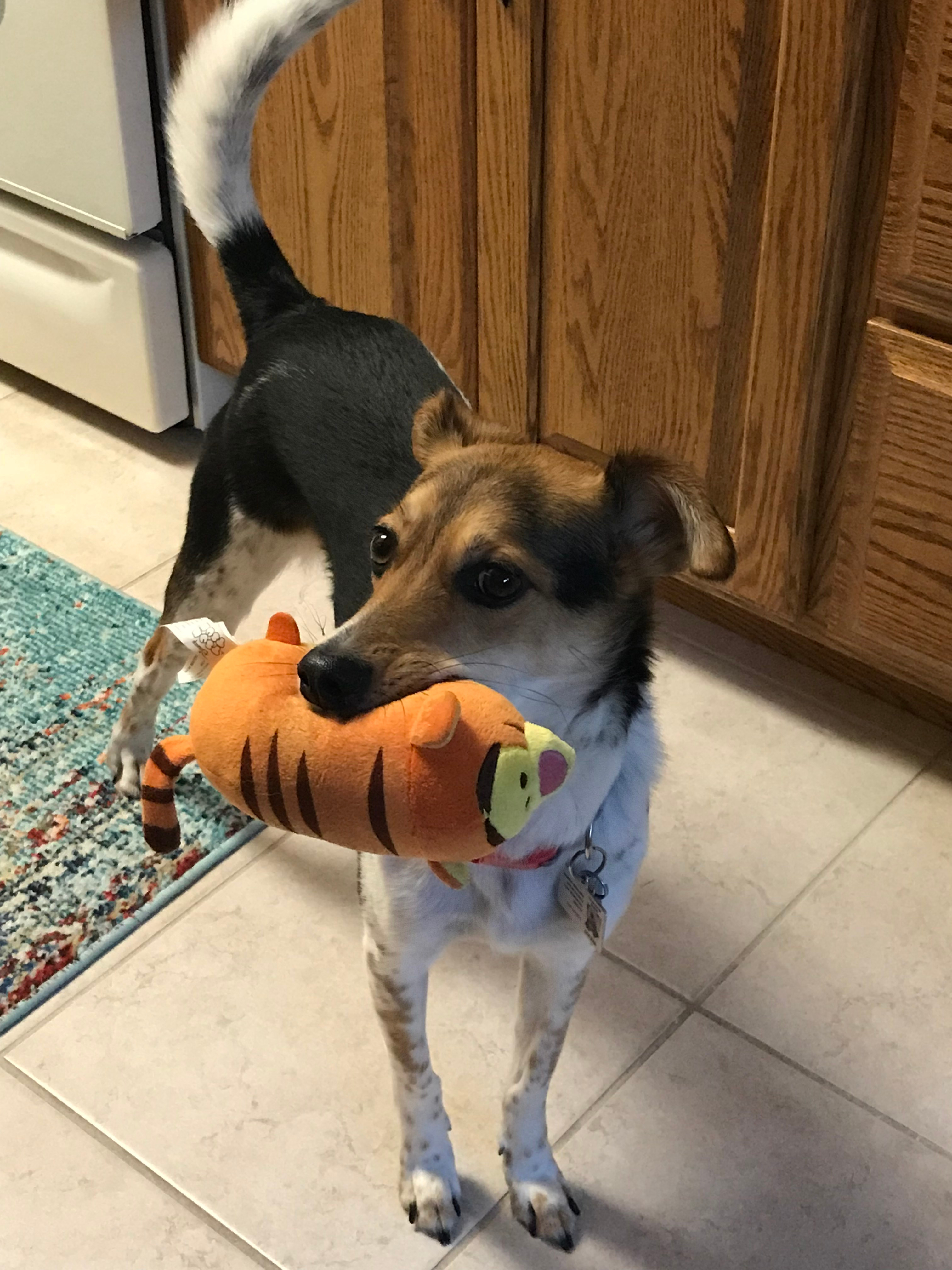 Pixie with Tigger