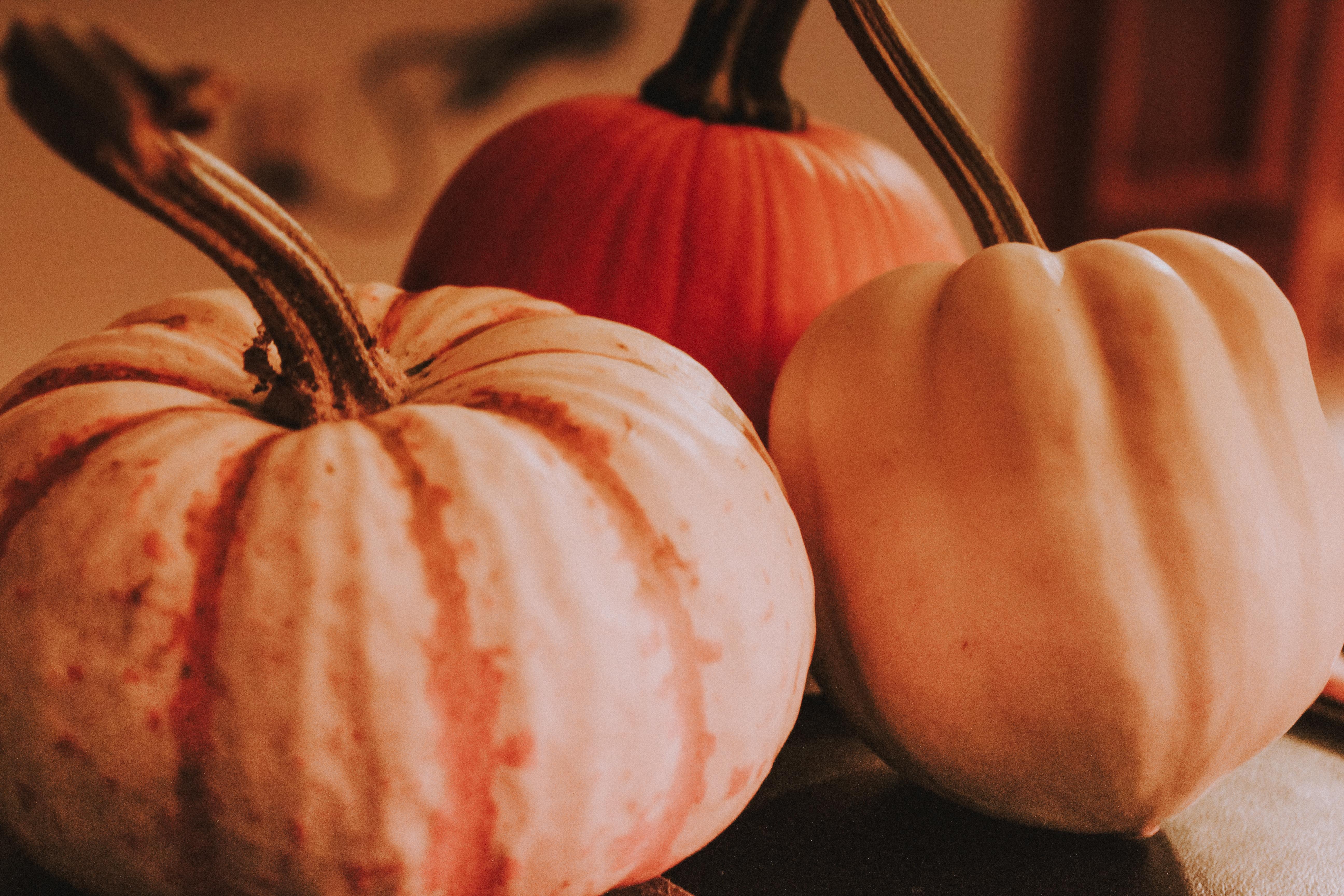 Fall Pumpkins Mae Polzine