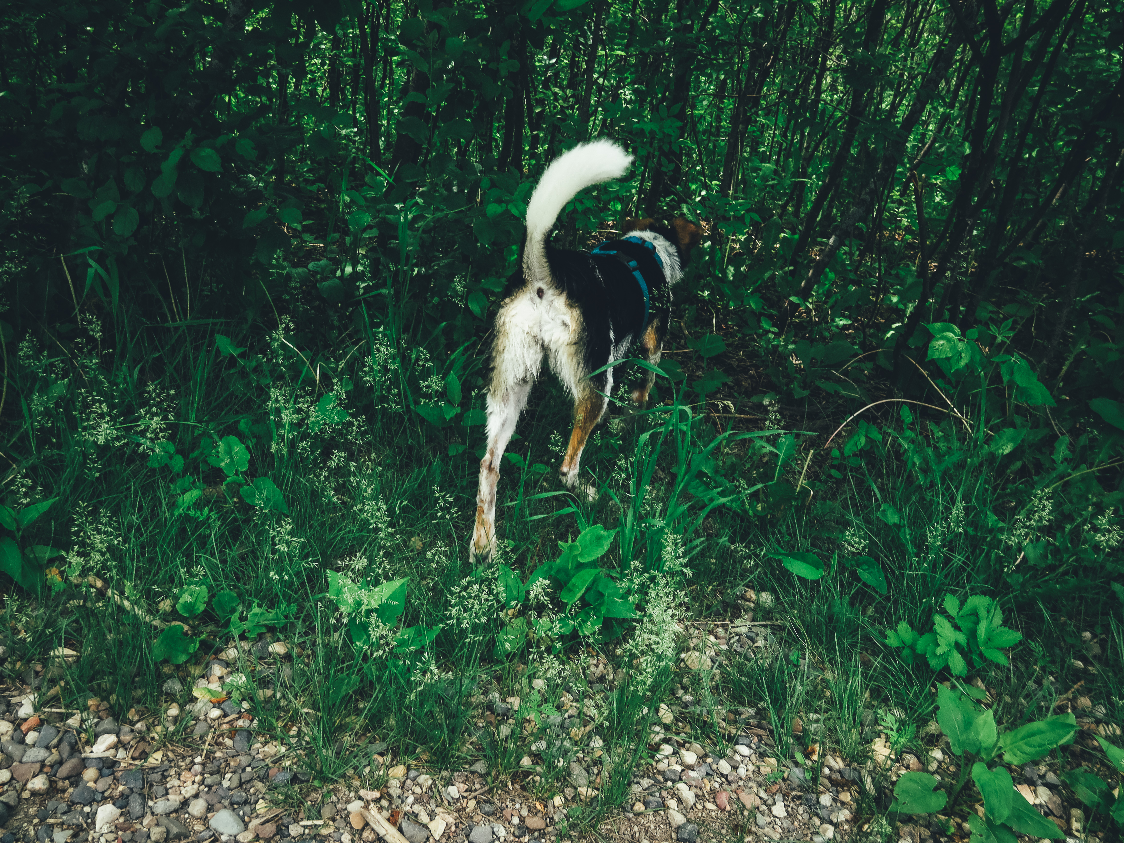 Pixie Exploring in the Woods